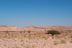 Dana biosfery rezerwa, Jordania, Środkowy Wschód Zdjęcia Royalty Free