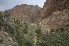 Dana Biosphere Reserve Fotografering för Bildbyråer