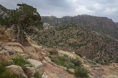 Dana Biosphere Reserve Arkivfoto
