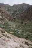 Dana Biosphere Reserve Arkivfoton