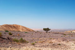 Mountains, desert, landscape, climate change, Dana Biosphere Reserve, Jordan, Middle East. Middle East, 03/10/2013: the mountain and desertic landscape seen from royalty free stock image