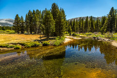 Dana Fork. The Tuolumne River originates in Yosemite National Park, high in the Sierra Nevada, as two streams. The 7-mile Lyell Fork rises at the Lyell Glacier Stock Images