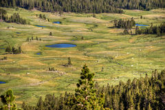 Dana Meadows, Yosemite lizenzfreies stockfoto