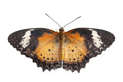 Danaidae butterfly Stock Photo