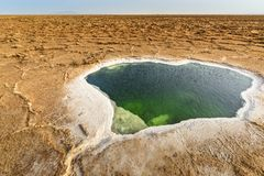 Danakil消沉,埃塞俄比亚,驴子Ale湖 库存照片