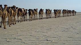 Danakil Desert Ethiopia stock image