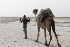 Danakil, Etiopia, Luty 22 2015: Daleko prowadzą odtransportowanie soli wielbłądzich karawanowych bloki od Danakil pustyni mężczyź fotografia stock