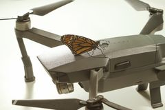 Danaus plexippus e fuco della farfalla di monarca fotografia stock
