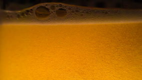 Dance of Beer Bubbles. Stream of beer being poured into a glass and creates a riot of gas bubbles and foam cap. Glass illuminated from below bright sunshine stock video