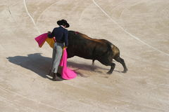 """The Dance. In France's Camargue Bulls are a passion and a way of life."""" in this picture we see the Razeteur ( Bullfighter who has jumped behind the fence to get Royalty Free Stock Image"""