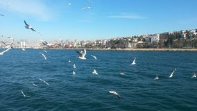 Dance of gulls, Bosphorus Royalty Free Stock Photos