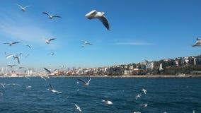 Dance of gulls, Bosphorus Stock Images
