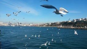 Dance of gulls Stock Image