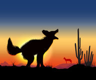 Dance jackal. Jackals howling in the desert in front worth jackal Royalty Free Stock Photos