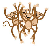 Dance monkey Royalty Free Stock Images