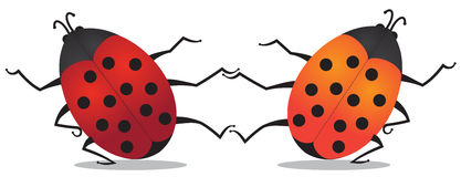 Dancing beetles. Illustration of two dancing beetles on white background Royalty Free Stock Photos