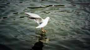 Dancing Bird2 Stock Images