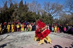 Dancing cinese del leone durante il nuovo anno cinese Immagine Stock Libera da Diritti