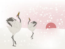 Dancing cranes Royalty Free Stock Images