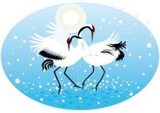 Dancing cranes Stock Image