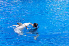 Dancing della donna dell'istruttore con il delfino in uno stagno Fotografie Stock Libere da Diritti