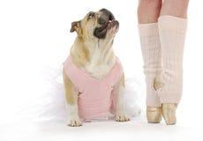 Dancing dog Stock Photos