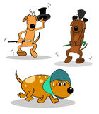Dancing dog Stock Images