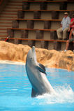Dancing dolphin Stock Photo