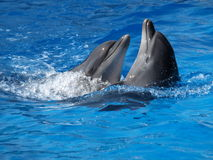 Dancing dolphins Stock Photo
