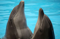Dancing dolphins Royalty Free Stock Photography