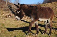Dancing Donkey Stock Photos