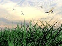 Dancing dragonflies Stock Photo