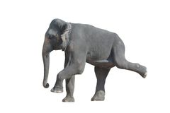 Dancing elephant. Dancing grey elephant (isolated, against white background Royalty Free Stock Photos