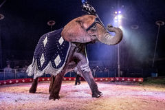 Dancing Elephant 2 Royalty Free Stock Photography