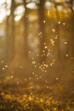 Dancing fairies (midges) in colorful forest Royalty Free Stock Photo