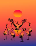 Dancing fine storks Royalty Free Stock Image