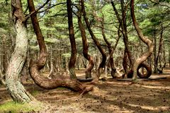Dancing forest Royalty Free Stock Photos
