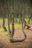 Dancing forest. Royalty Free Stock Photography