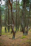 Dancing forest. Royalty Free Stock Photo