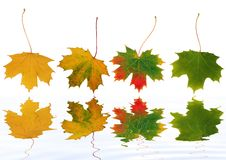 Dancing Leaves Royalty Free Stock Photos