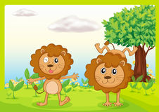 Dancing lions Stock Images