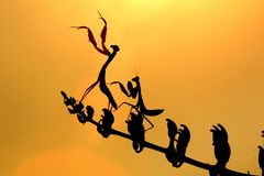 Dancing mantis silhoutte stock photo