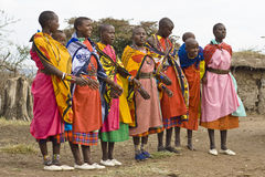 Dancing Masai women. KENYA-2008,JULY 13. : Young Masai women singing and dancing in native Masai village nearby Ololaimutiek Gate to NR Masai Mara,western Kenya Royalty Free Stock Photos