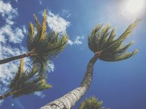 Dancing palm trees royalty free stock image