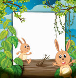 Dancing rabbits and a white board Stock Image