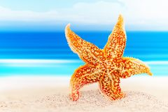 Dancing starfish against the background of the sea shore. Starfish on the knee Stock Image