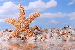 Dancing Starfish At The Beach. With sea shells Stock Photo