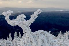 dancingowa zima Zdjęcia Stock