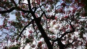 Dancingowy drzewo Obrazy Royalty Free