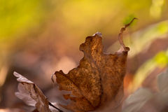 Dancingowy jesień liść Obraz Stock